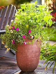 Plant Combination Ideas For Container Gardens - 2751 best container gardening images on pinterest garden