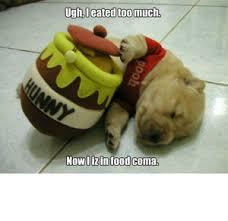 Food Coma Meme - dog pooh food coma by cbsman meme center