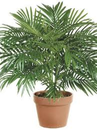 buy houseplants u0026 tropical plants free shipping over 99 99