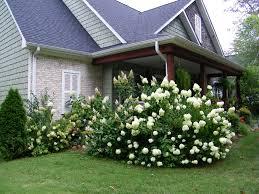 cottage style backyards cottage style decorating with bold hydrangeas flowergardengirl