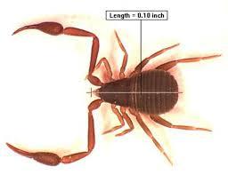 Ants In Bathtub Bugs In The Bathroom News