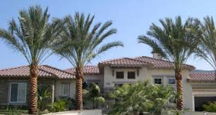 sylvester palm tree sale florida palm trees growers palm tree nursery at south coast growers