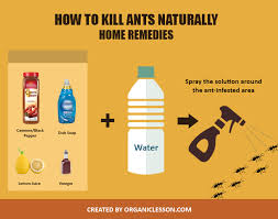 use these simple home remedies to kill ants naturally at home or