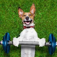 the 20 best active dog breeds outside online