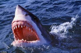 What Color Is Tope by Avoid Shark Attacks By Not Wearing Bright Swimsuits And Never Play