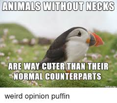 Puffin Meme - 25 best memes about unpopular opinion puffin unpopular opinion