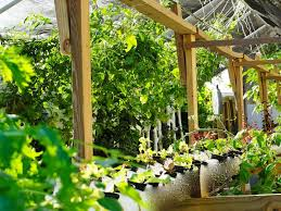 beautiful backyard aquaponics system design good looking home design