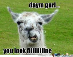 Llama Meme - flirty llama by derpettewashere meme center