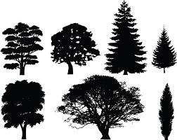 best oak tree silhouette 17916 clipartion com