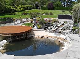 native pond plants uk pond stars uk contact us for pond cleaning pond care u0026 koi care