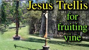 jesus trellis build for fruiting vine youtube
