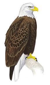 robot birds haven u0027t society audubon