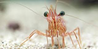 saltwater aquaponics u0026 indoor shrimp farming garden culture magazine