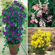 evergreen potted plants garden ideas