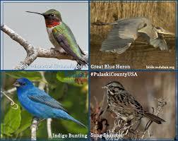 wild birds pulaski county usa