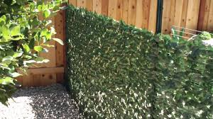 ivy fence roll covers dog enclosure wall youtube
