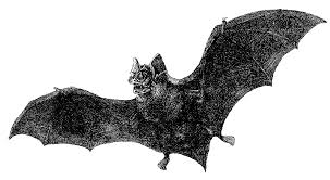 halloween bats transparent background antique images free halloween graphic vintage vampire bat with