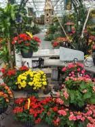 Breezewood Gardens Chagrin Falls - hanging baskets breezewood gardens