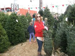 christmas tree country in pacific beach san diego