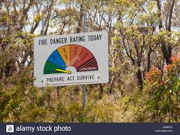 Wildfire Black Gum Tree by Wildfire Australia Stock Photos U0026 Wildfire Australia Stock Images