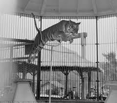 black and white pictures reveal life at benson u0027s wild animal farm