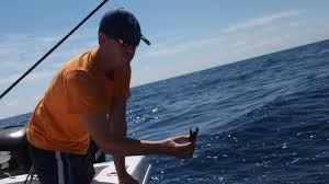 Weeeeeeeeeee Conservancy We Release A Sea Turtle With A Gps Tracker And See