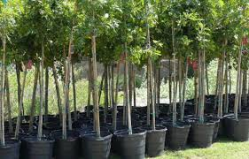 Trees Worldwide Wyndham Worldwide Celebrates One Million Trees Milestone With