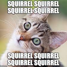 Random Cat Meme - random cat memes imgflip