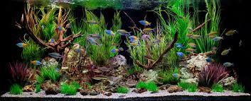 Home Aquarium Ez Aquarium