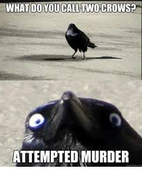 Murder Meme - 25 best memes about crows attempted murder crows attempted