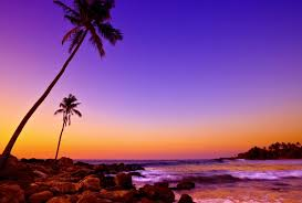 beaches purple sunset palm wallpaper macbook pro for hd 16
