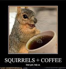 Squirrel Meme - post a squirrel meme page 2 christian forums