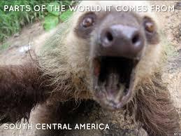 4 toed sloth three toed sloth by kprice