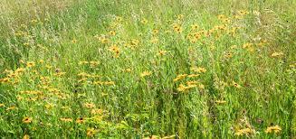 kansas native plants our story u2014 prairie whisper gardens