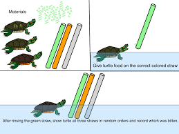 turtle info 4 can we see in color slate and scoria