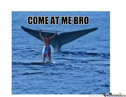Whaling Meme - come at me bro lvl whale by exw psixologika meme center