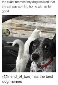 Best Dog Memes - 25 best memes about dog meme dog memes