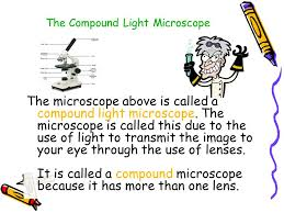 why is a light microscope called a compound microscope ppt 1 microscope skills ppt video online download