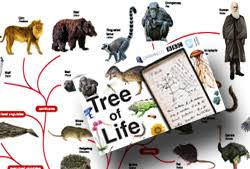 ou on the bbc life tree of life poster interactive