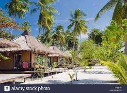 palm trees and beach bungalows koh tao island thailand stock photo