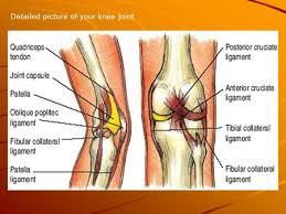 Lateral Patellar Ligament Injuries To The Knee Ligaments Tendons Menisci Patella Bursa