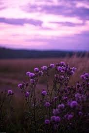24 best colors of life the purple images on pinterest all