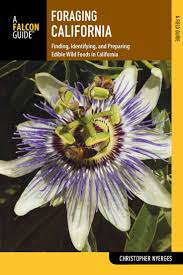 edible native plants 1120 best survival wild edible and or medicinal plants images on