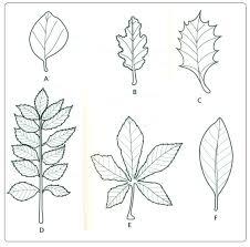 12 using simple keys biology notes for igcse 2014