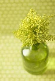 lime green l shade 305 best zeleno lime images on pinterest color palettes green and
