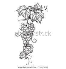 grape leaves style sketch stock vector 484120867 shutterstock