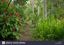 Tropical Plants Perth Path Through The Tropical Plants Garden In Gran Canaria Canary