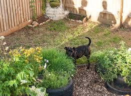 caroline ingraham sensory garden now open собаки площадка