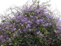 28 purple flowering all photos gallery purple flower