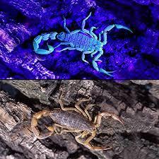 bed bug uv light loftek 51 uv ultraviolet flashlight 395 nm led handheld blacklight